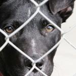 ACTION! Firma contro la  strage dei cani della Malaysia