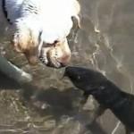 Il cane e il pesce, un'amicizia senza frontiere [Video]