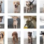 Emergenza adozioni per gli animali del canile Parrelli