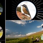 Birdwatching. Birdsnap, l'app per l'identificazione