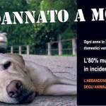 Animali, chi li abbandona rischia anche l'arresto