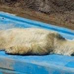 ACTION! Chiediamo il trasferimento dell'orso Arturo