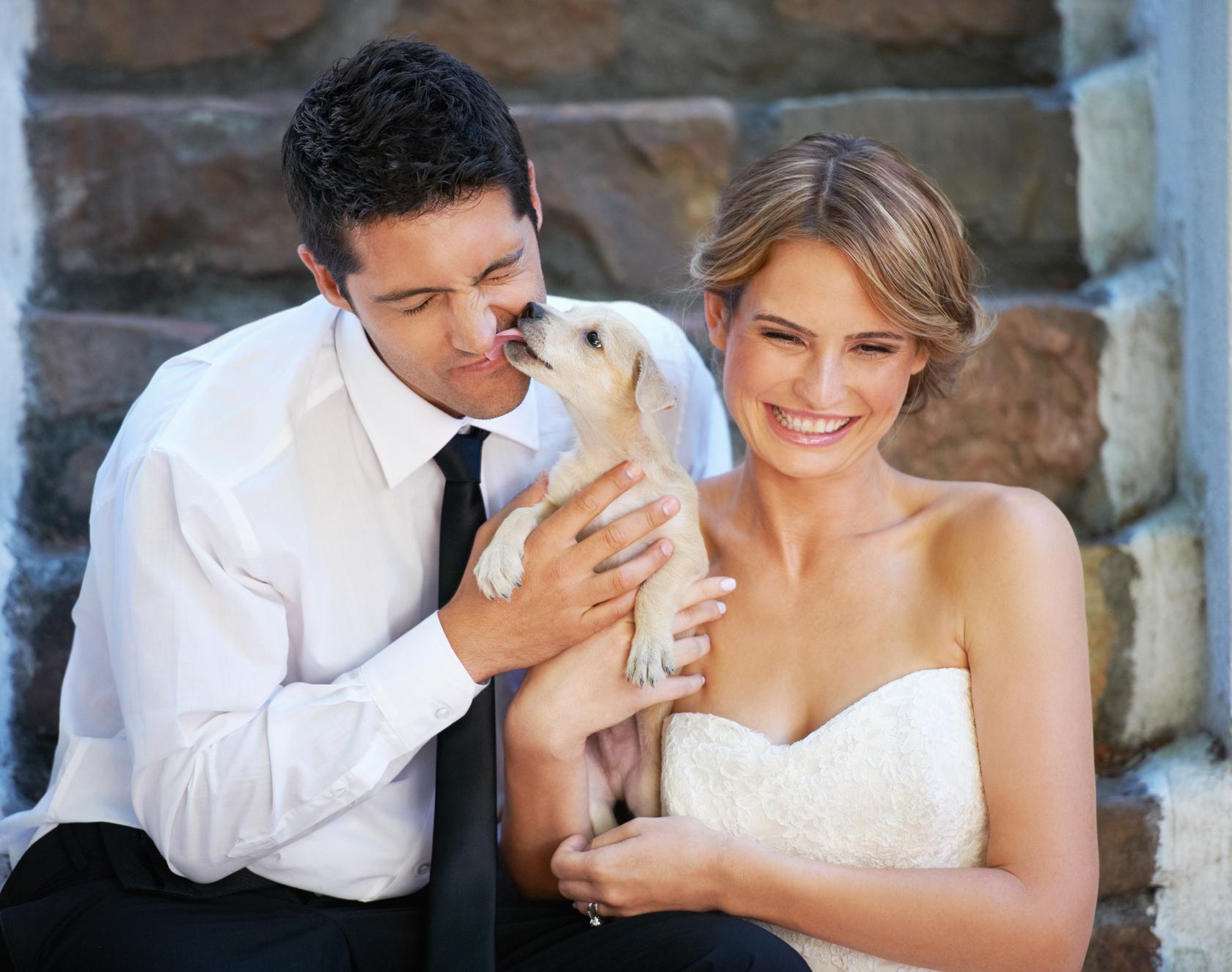 wedding dog sitter Archivi