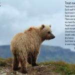 """""""Tratta ogni orso"""" (Gary Lawless)"""