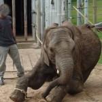 ACTION! Firma contro le torture degli elefanti