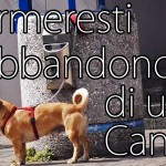 Fermeresti l'abbandono di un cane? [Video]