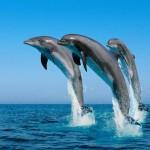 """""""Dolphin watching"""" per osservare i delfini rispettandoli"""