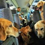 Oltre 60 mila animali in estate sulle Frecce di Trenitalia
