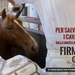 ACTION! Firma e diffondi per i cavalli destinati al macello
