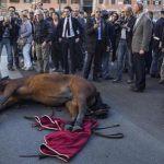 Roma, un altro cavallo delle botticelle caduto. Scriviamo al sindaco