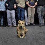 E' morto Loukanikos, riot dog greco