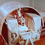 Laika, lanciata nello spazio a morire di terrore
