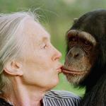 Goodall, stiamo distruggendo l'habitat degli scimpanzè