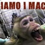 ACTION! Firma per liberare i macachi dell'Università di Modena
