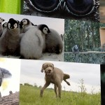 Animali. I 10 video top secondo 'Nature'