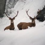 Animali. Contro freddo e neve, le iniziative  del Cfs