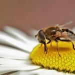 Anche le api ora hanno la loro anagrafe