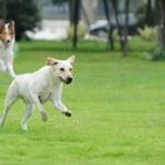 A Roma si può adottare un'area cani