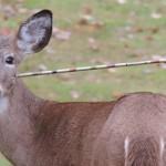 In Liguria c'è chi vuole la caccia con arco e frecce. Scrivi