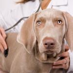 Animali. Dalle protesi ai tumori, la chirurgia fa miracoli