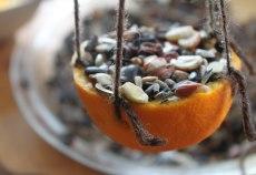arancia birdgardening