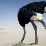 Gli struzzi non mettono la testa nella sabbia