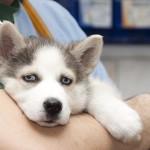 YouVet. Curare gli animali con l'omeopatia
