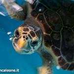 Un centro recupero per le tartarughe marine in Calabria