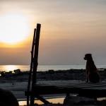 Un'isola thai con tanti cani e senza veterinari. Aiutiamoli