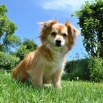Ai cani e gatti senza casa un terreno confiscato alla mafia