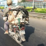 ACTION: Firma e diffondi per i cani macellati in Vietnam