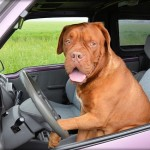 Contro gli abbandoni, la guida pet-friendly del Tci