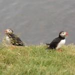 Uccelli. In Europa a rischio estinzione una specie su tre