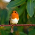 Il Rapporto Ispra sulla popolazione degli uccelli