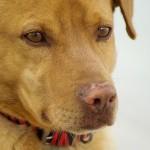 I cani diffidano dalle persone ostili ai loro umani