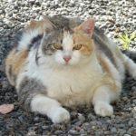 YouVet. Sterilizzazione e obesità nel gatto