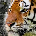 Apt chiede il Premio Nobel per gli animali vittime dell'uomo