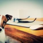 Diario di un cane e di un gatto