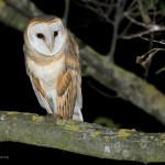 Rifugio d'uccelli notturni, poesia di Salvatore Quasimodo