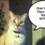 Animali. #BastaBotti. Manda un foto-messaggio
