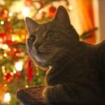 A Natale vai alla festa con il salvadanaio per gli animali