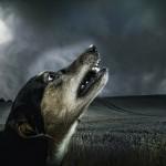 Lo smog e gli animali, conseguenze e precauzioni