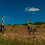 I dinosauri si corteggiavano danzando, come gli uccelli