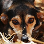 Nei canili italiani 750 mila cani in attesa d'adozione