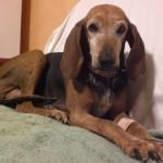 Mai più come Lea, azione contro la malasanità veterinaria