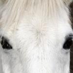 Ai cavalli basta una foto per leggere le emozioni