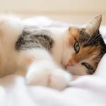 Più felici grazie al gatto, anche se sul web