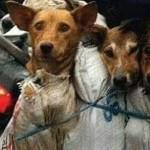 ACTION! Fermiamo la macellazione dei cani. Petizioni