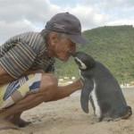 L'amicizia di Dindim, il pinguino, per l'umano che lo ha salvato