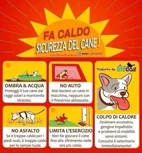 Le azioni per mettere in sicurezza gli animali dal caldo